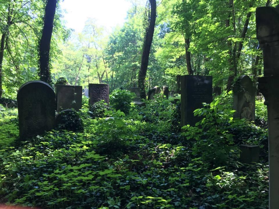 Porządkowanie Cmentarza Żydowskiego w Warszawie przy ul. Okopowej.